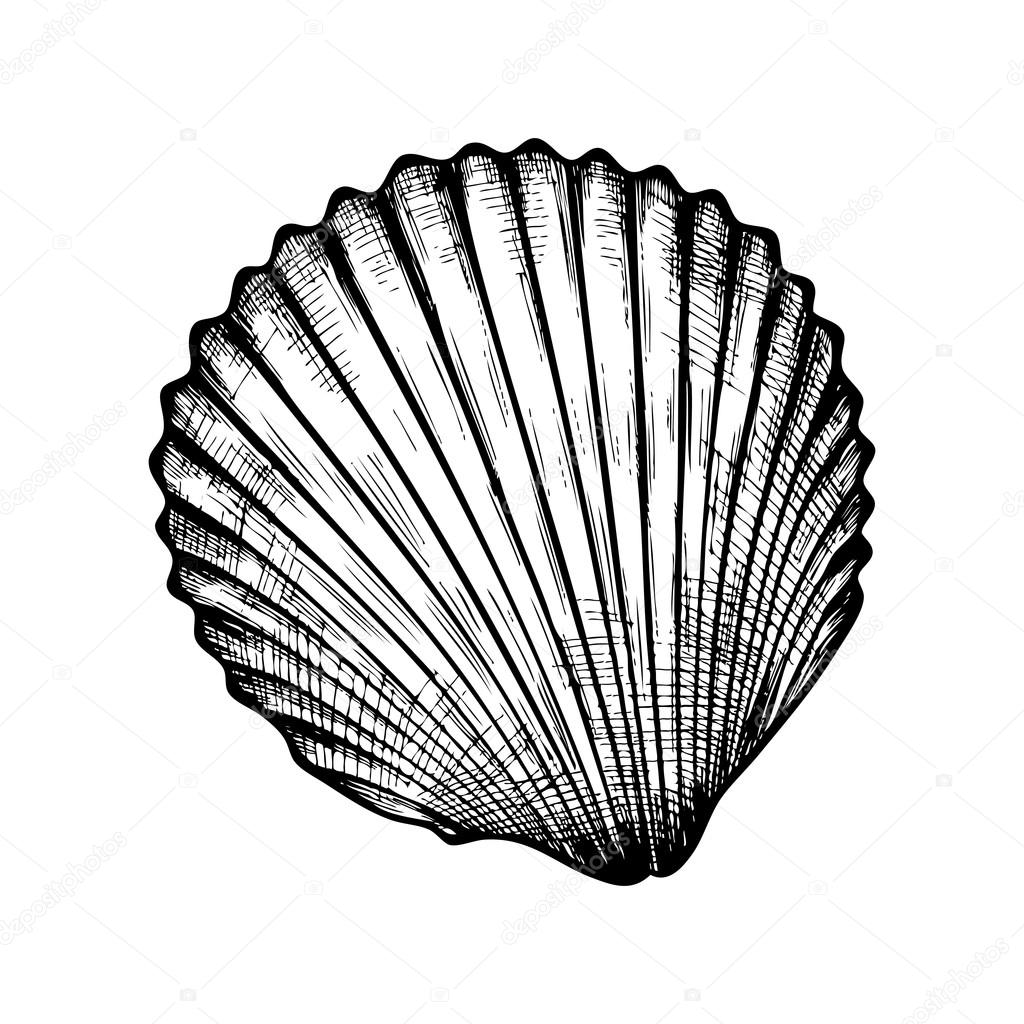 1024x1024 Seashell On White Background Stock Vector Mamamariagood