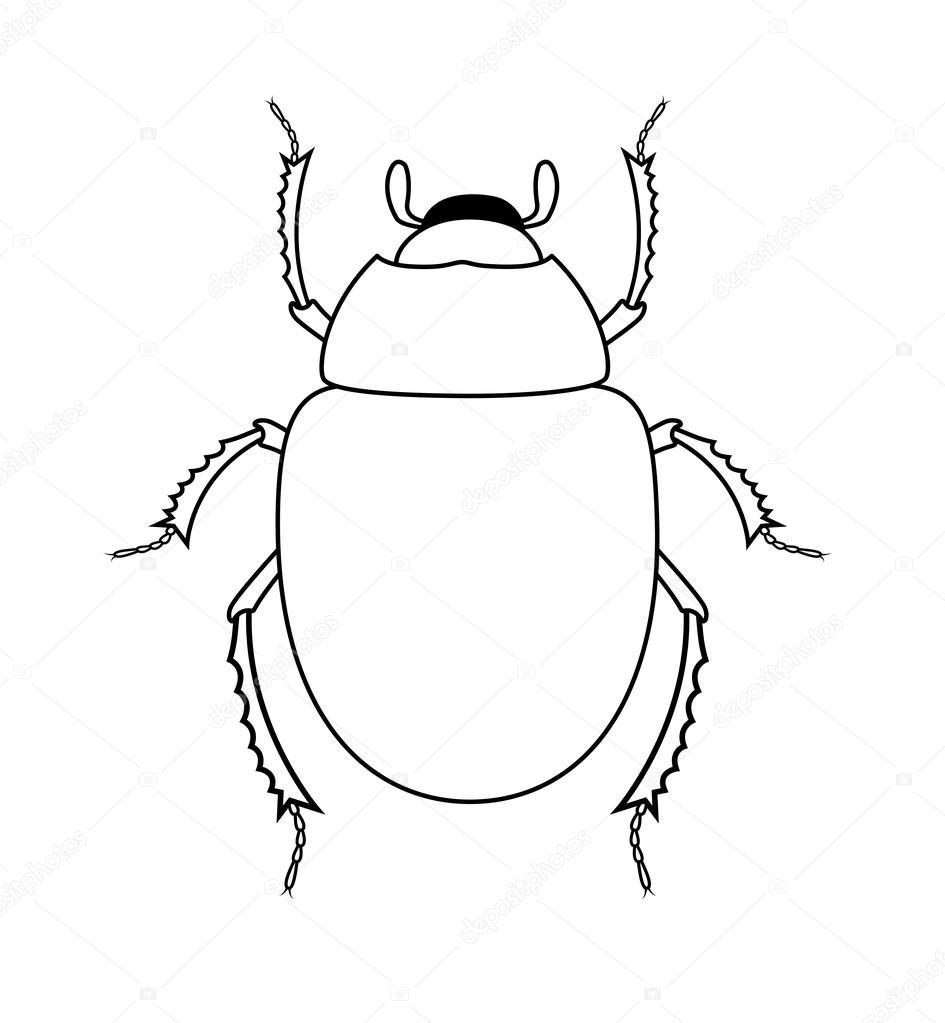 945x1023 Drawing Art Of Scarab Beetle Insect Stock Vector Baavli