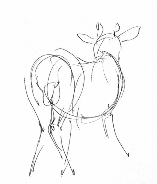 511x600 Tiffanny's Sketchbook Artist Death Grip + San Antonio Wildlife