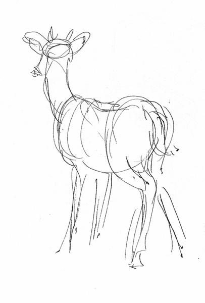 406x600 Tiffanny's Sketchbook Artist Death Grip + San Antonio Wildlife