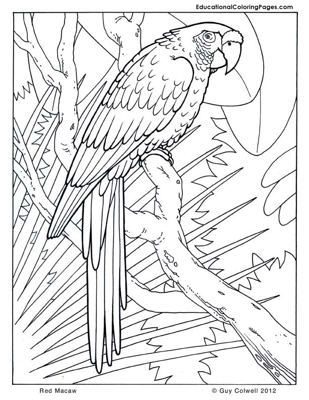 Scarlet Macaw Drawing at GetDrawings.com | Free for personal use ...
