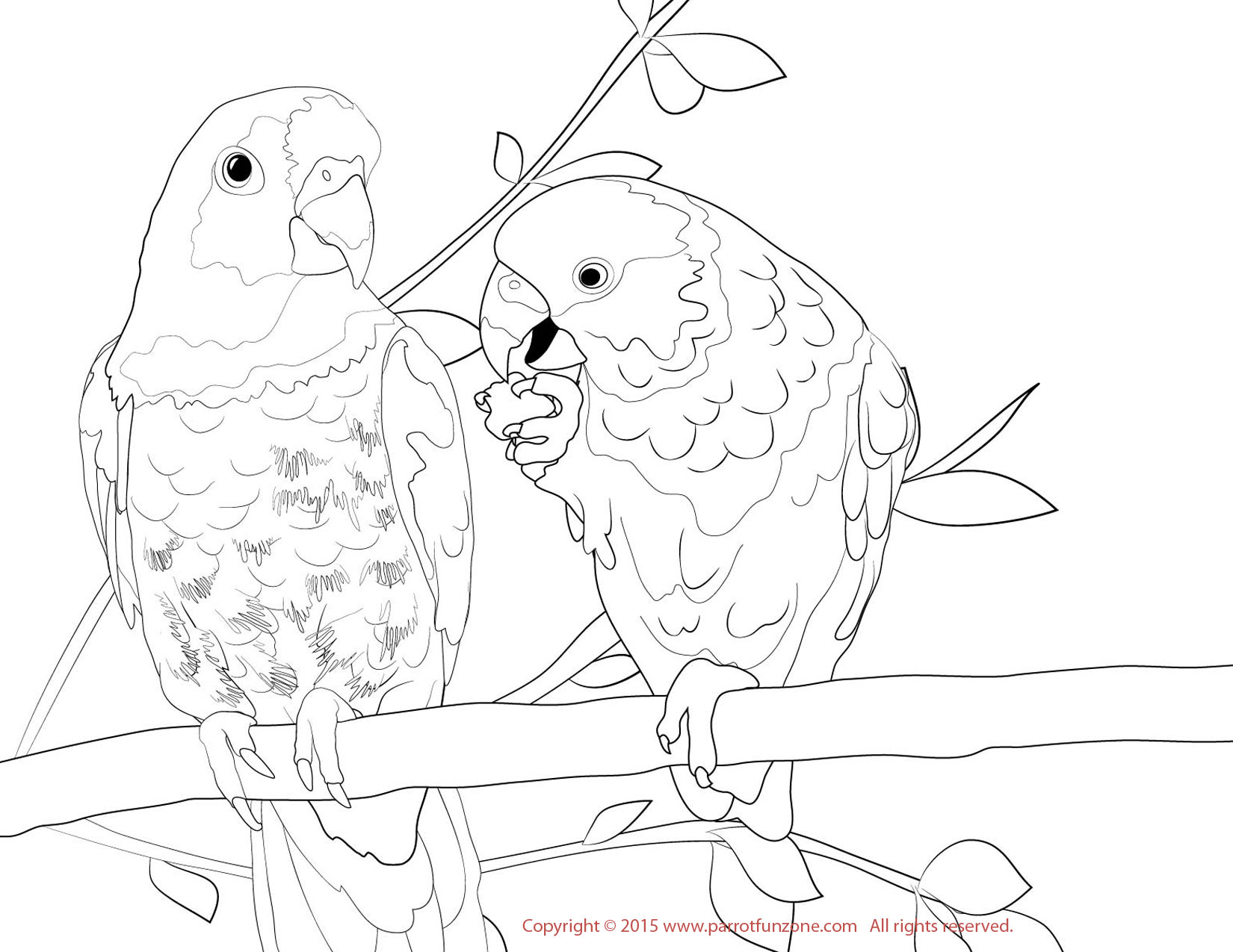 Scarlet macaw drawing at free for for Scarlet macaw coloring page