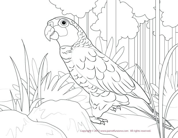 618x478 Coloring Exciting Scarlet Macaw Coloring Page. Scarlet Macaw