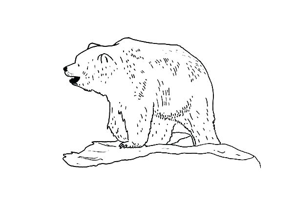 600x424 Brown Bear What Do You See Coloring Pages Scary Brown Bear
