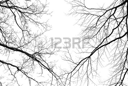 450x301 Scary Old Entrance To Forest Graveyard In Dense Fog Stock Photo