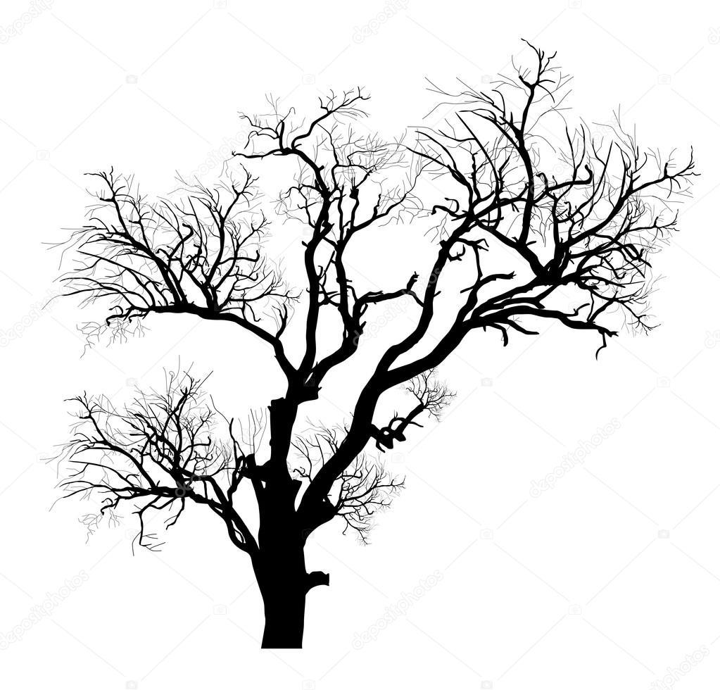 1023x980 Shape Of Scary Dead Tree Stock Vector Baavli