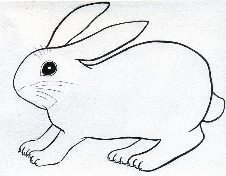 737x573 Scared Bunny By Lilaaku