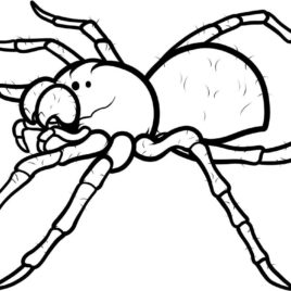 268x268 Creepy Spider Coloring Pages Google Twit Coloring Page Of Spider