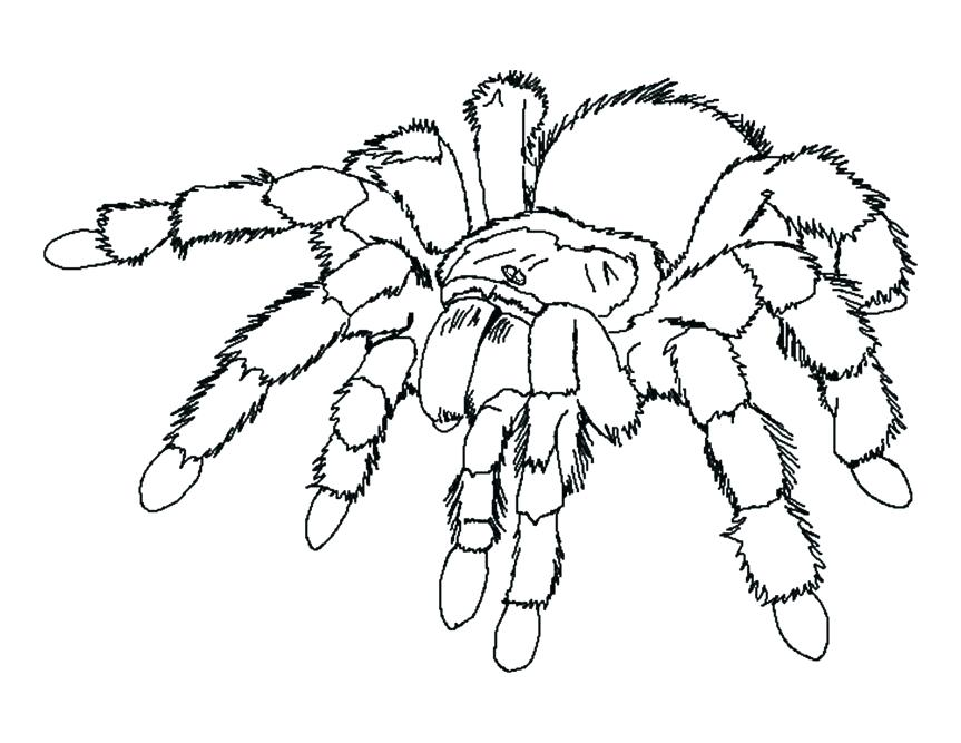 863x667 Halloween Coloring Pages Scary Spider Pages Coloring Printable