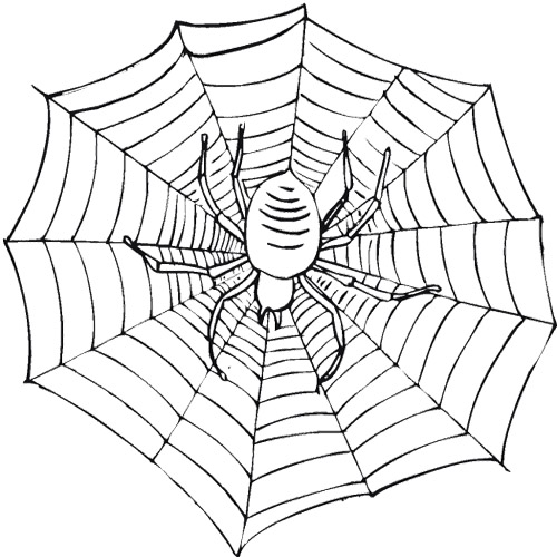 500x500 Scary Spider On A Web Coloring Page Cute Spider
