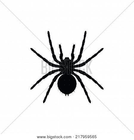 450x470 Spider Images, Illustrations, Vectors