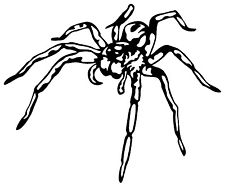 225x186 Tarantula Spider Rare Vinyl Decal Sticker Ebay
