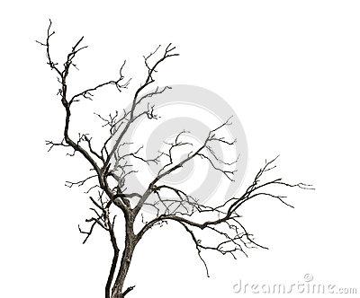 400x332 Drawn Dead Tree Horror