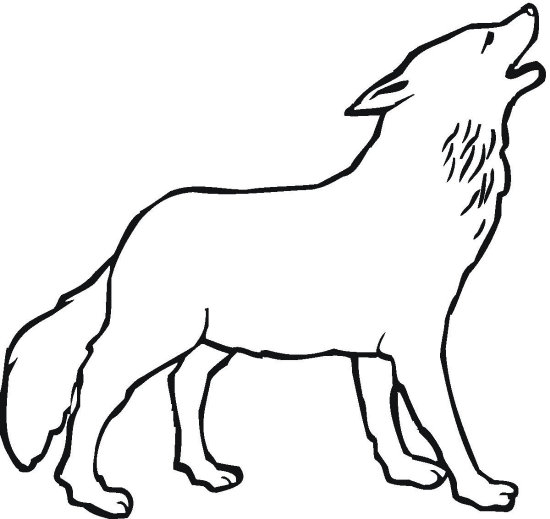 550x519 Wolves Coloring Pages