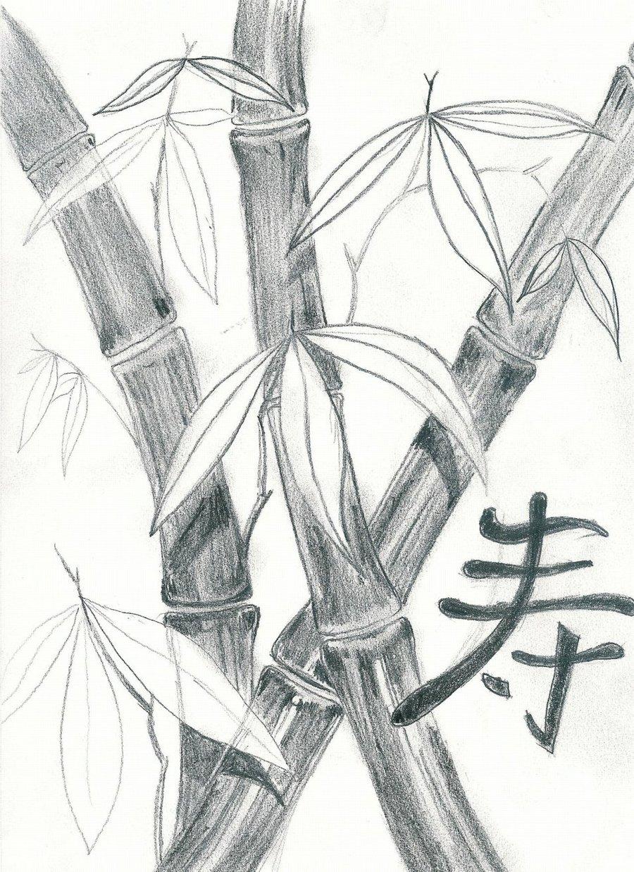 900x1237 Bamboo Sketch By Dragovich
