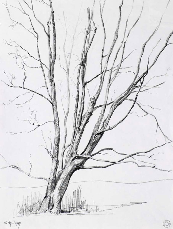 574x760 Pencil Drawings Trees Tree Ii Atherton Warks Drawings Cr108 1987