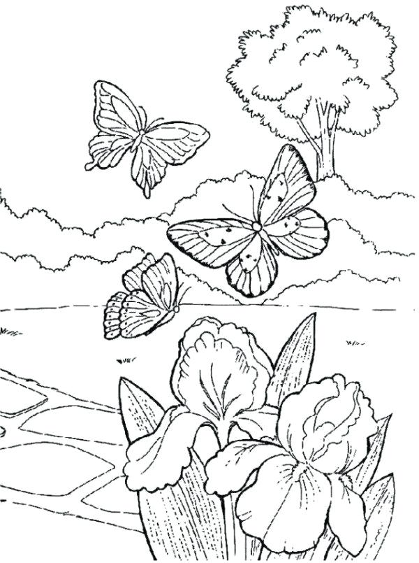 600x805 Great Spring Coloring Pages Best Of Scenery With Nature