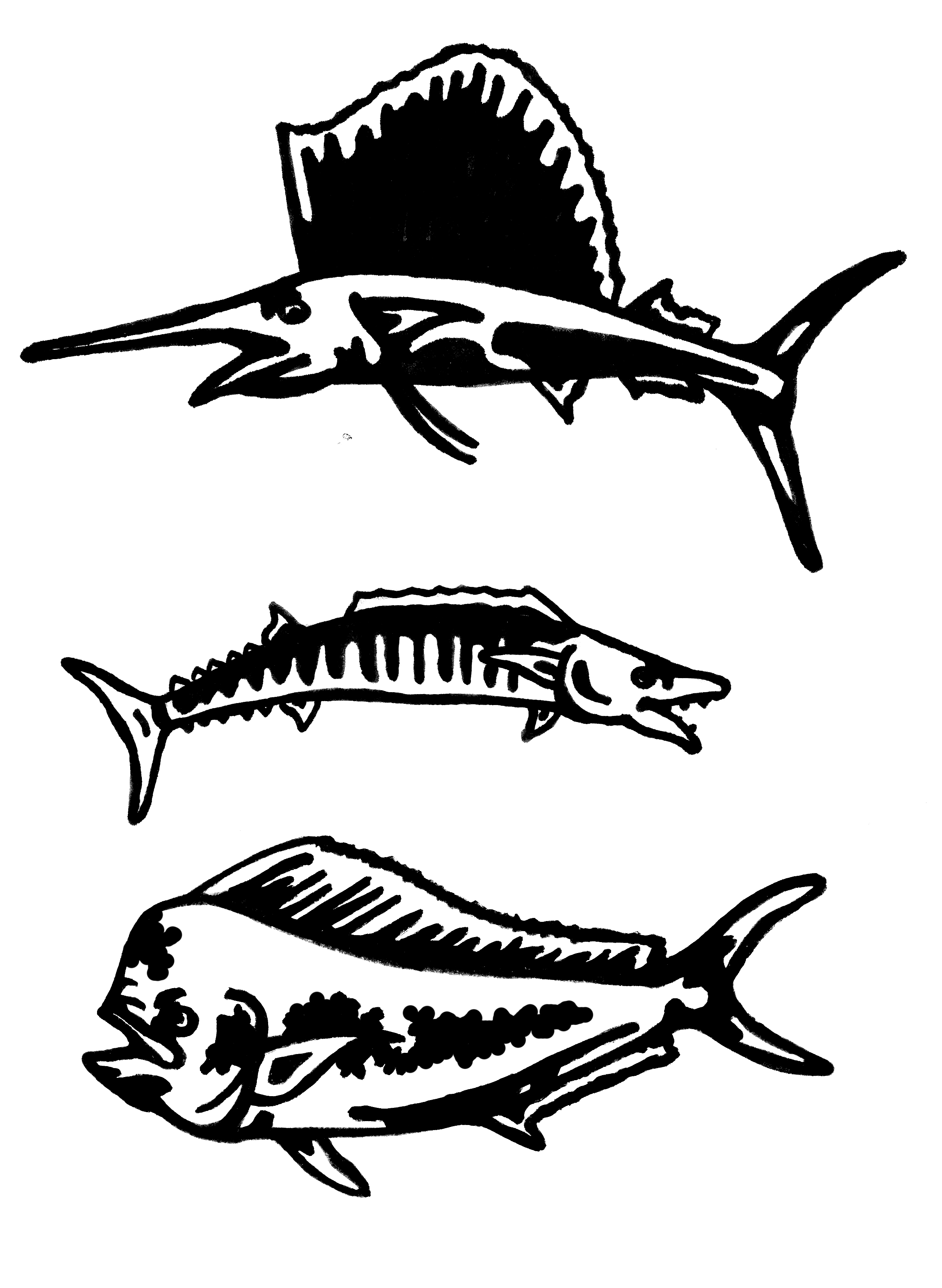 2417x3303 Bait Fish Amp Big Fish Drawings Patricia Bell
