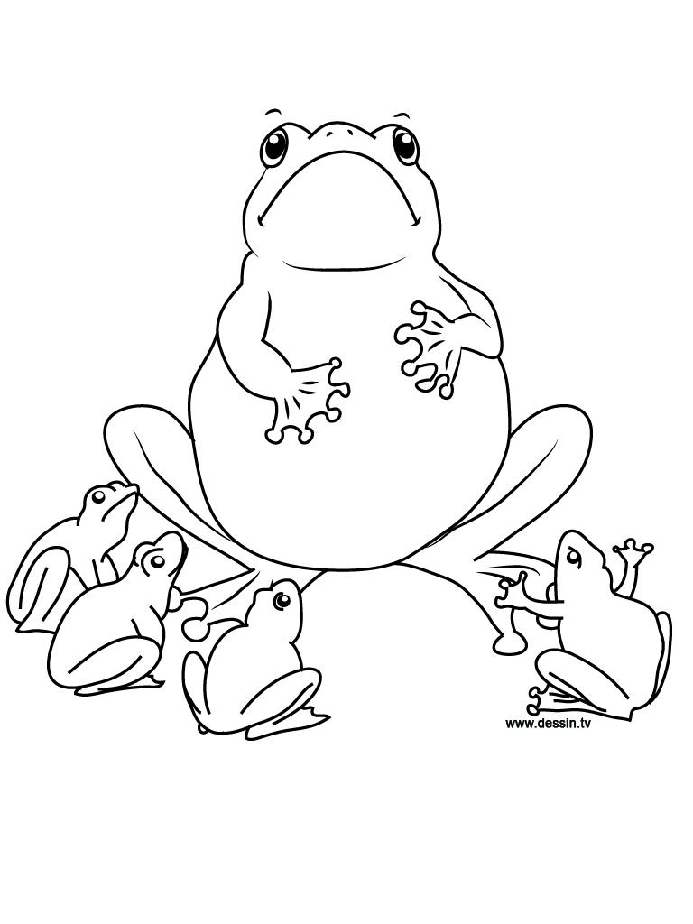 768x1024 Coloring Frog School