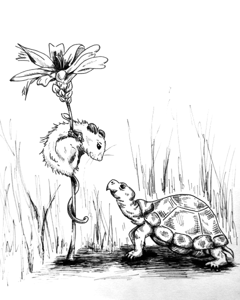 480x600 Mouse And Turtle