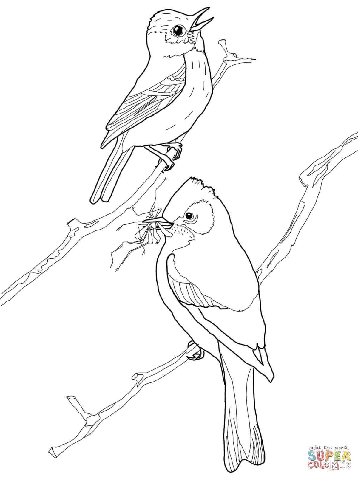 1200x1600 Scissor Tailed Flycatcher Coloring Page Free Printable Coloring
