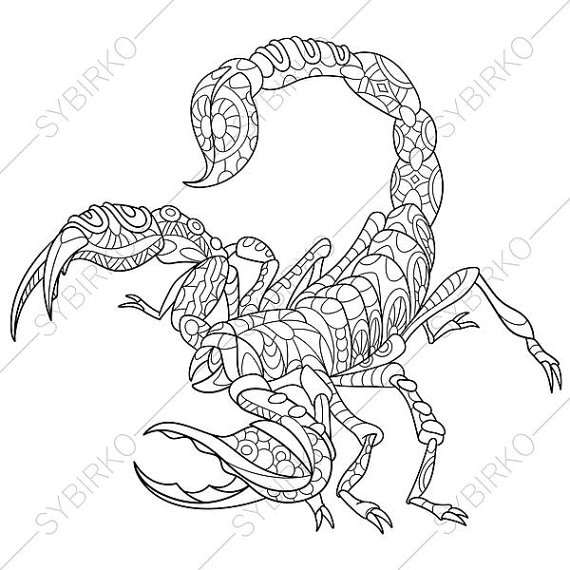 570x570 Scorpion. Scorpio Zodiac Sign. Coloring Page. Animal Coloring