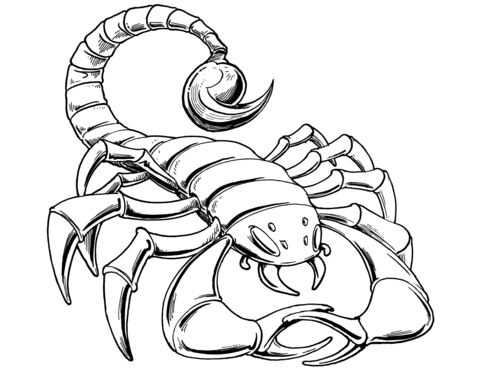 480x371 profitable scorpion coloring pages scorpions free