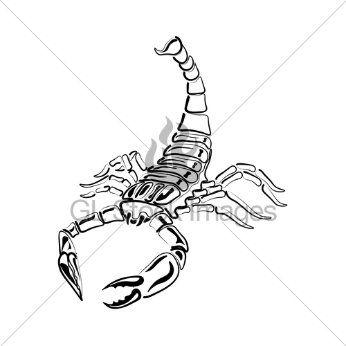 500x500 Black And White Scorpion For Tattoos, Zodiac Sign Gl Stock Images