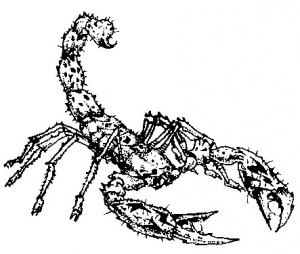 300x254 Scorpion (Warcraft I)