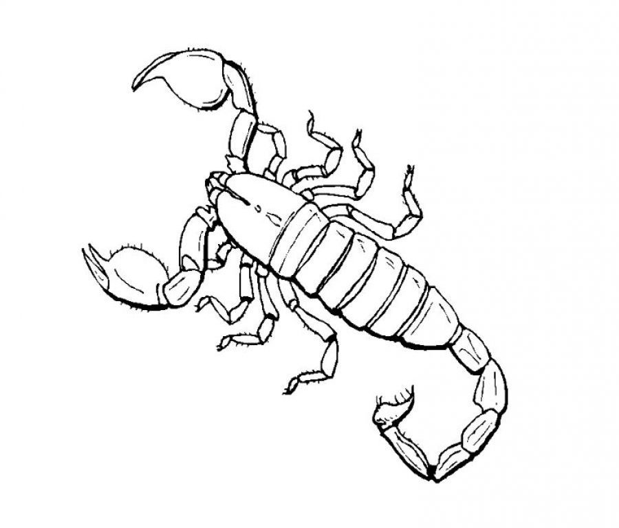 900x768 Scorpion Coloring Page Cool Pictures Animals Printable Free Pages