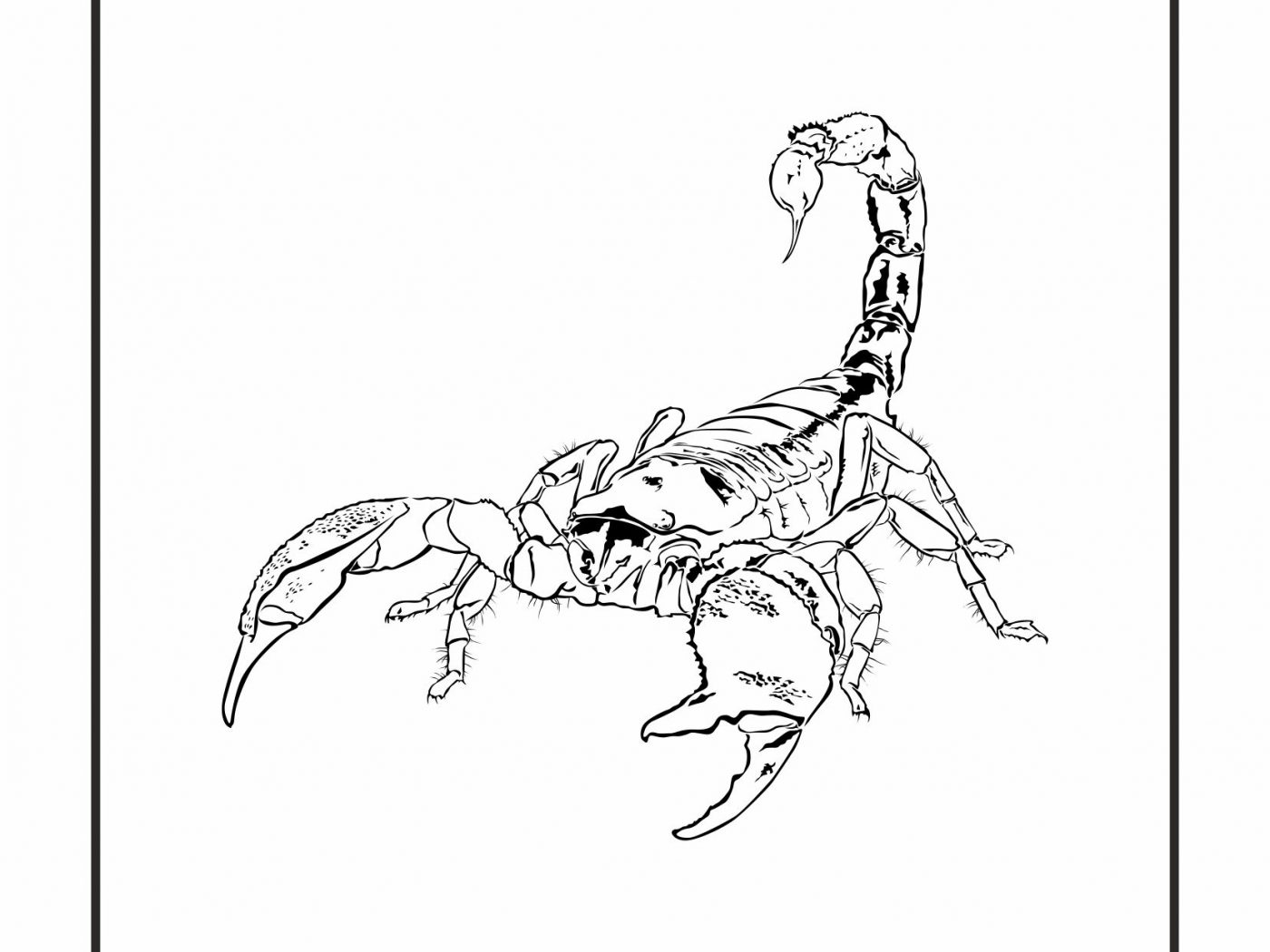 1400x1050 Cartoon Scorpion Coloring Page Free Printable Animals Desert Pages