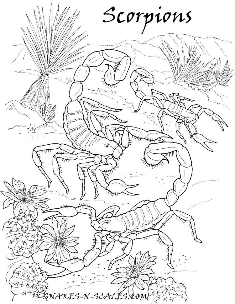 750x973 Scorpions Coloring Page Snakes N Scales Free Printable Tarantula
