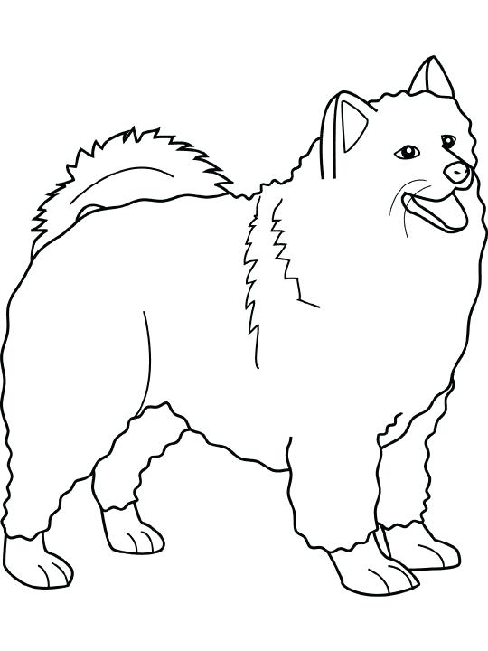 540x720 Epic Scottie Dog Coloring Page Free Download The Best Ideas