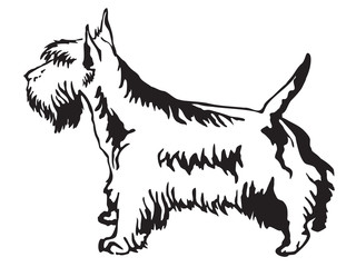 320x240 Search Photos Scottish Terrier