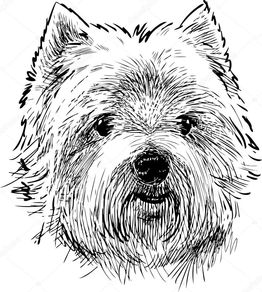 916x1023 Portrait Of A Scottish Terrier Stock Vector Samakarov@mail.ru