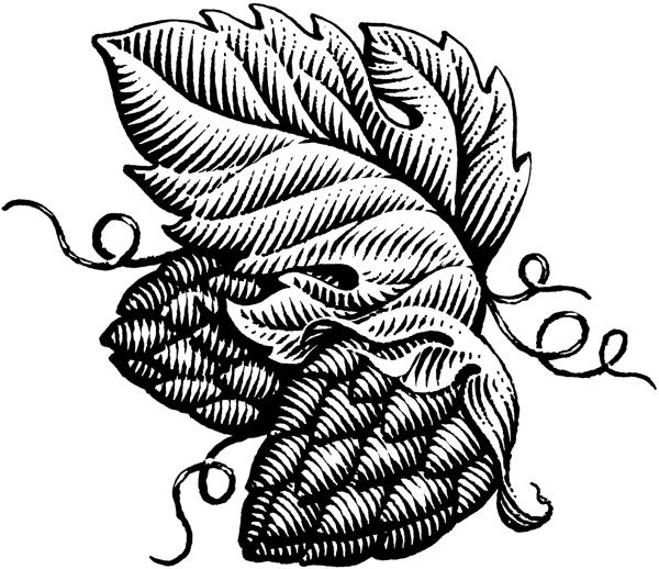 600x518 Plants By Michael Halbert, Via Behance Graphic Design Amp Logos