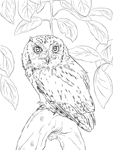 360x480 Eastern Screech Owl Coloring Page Free Printable Coloring Pages