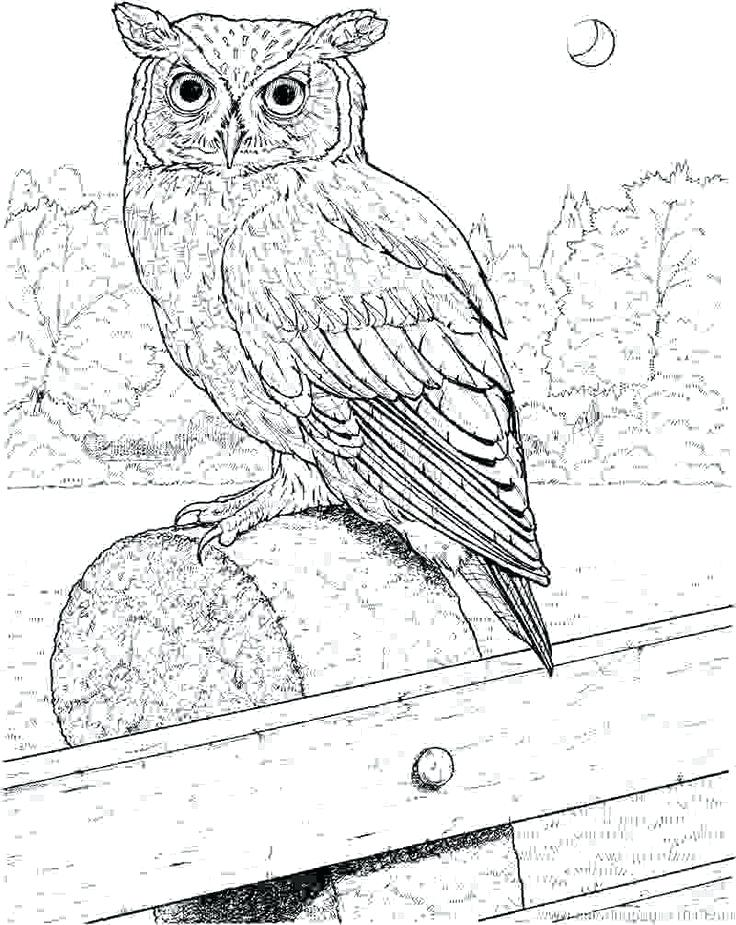 736x925 Great Horned Owl Coloring Page Image For Nature Great Horned Owl