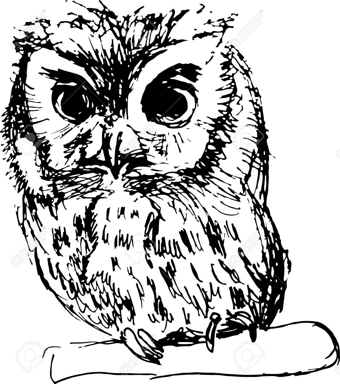 1151x1300 Hand Drawn Sketch Of An Owl Vector Illustration Royalty Free