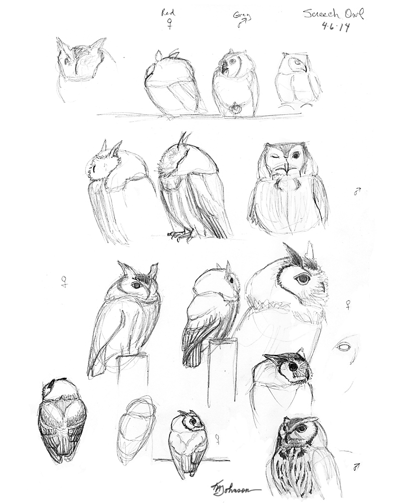 792x1008 How To Draw An Owl, Screech Owl Drawing Sketchbook By Nature