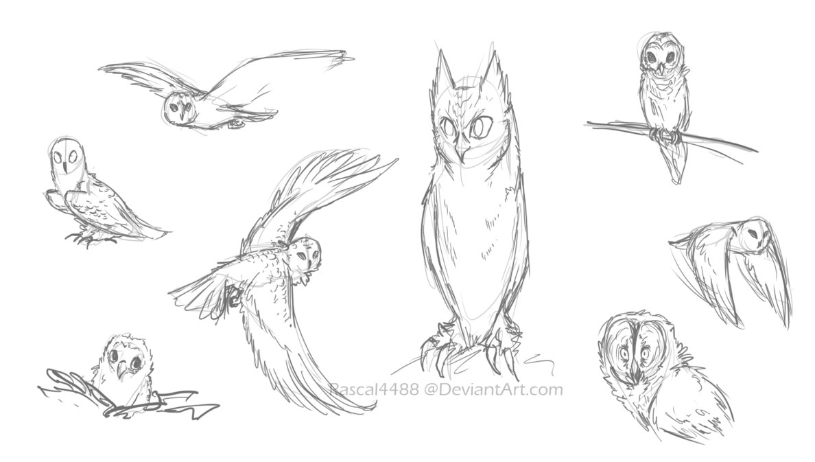 1188x673 Owl Sketches By Rascal4488