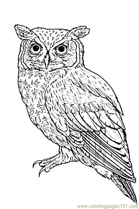 485x727 Screech Owl Coloring Pages