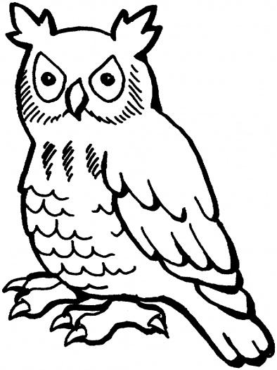 394x525 Security Owl Outline Drawing Free Download Clip Art On Clipart