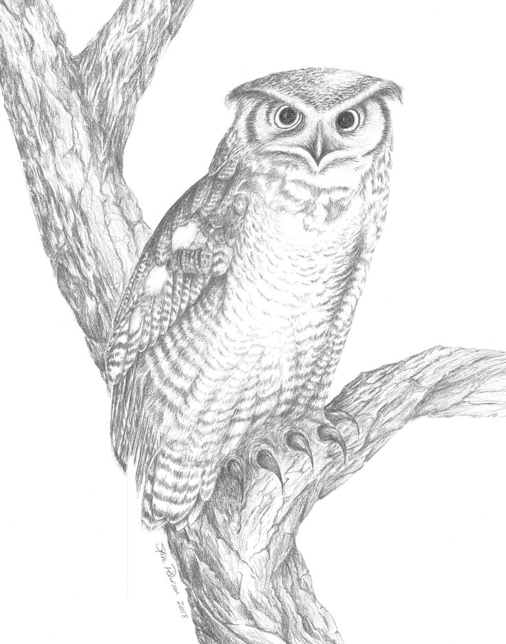 735x935 The Best Owl Drawing Images Ideas