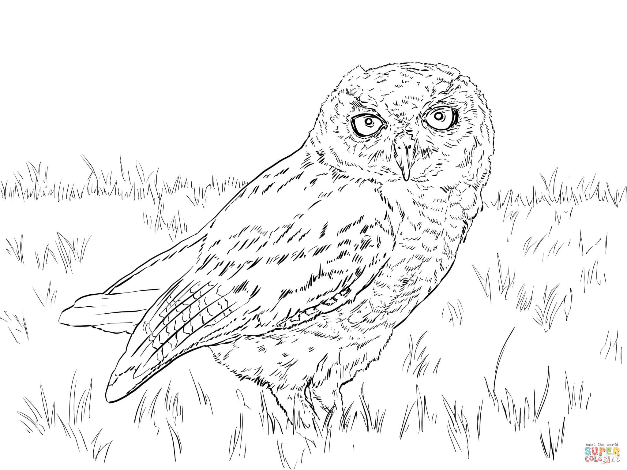 2048x1536 Western Screech Owl Coloring Page Free Printable Coloring Pages
