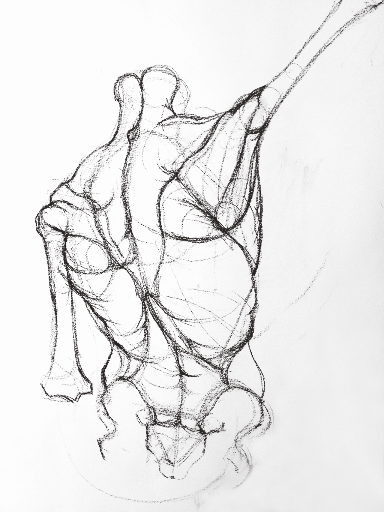 1280x1707 Figure Drawing Amp Anatomy The Torso Figure Drawings