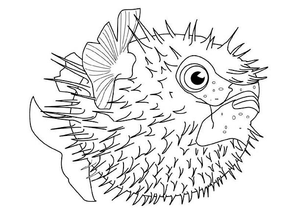 600x450 Download Online Coloring Pages For Free