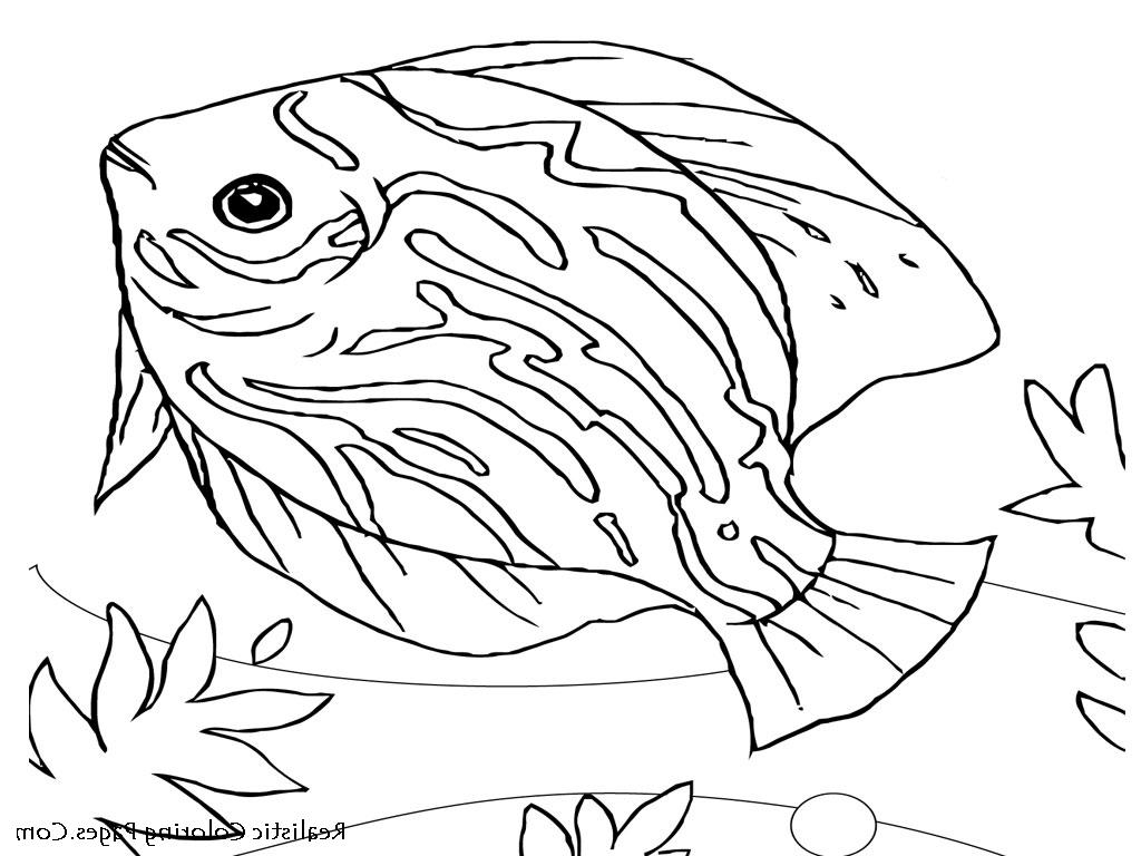 1024x768 Draw Of Sea Animal