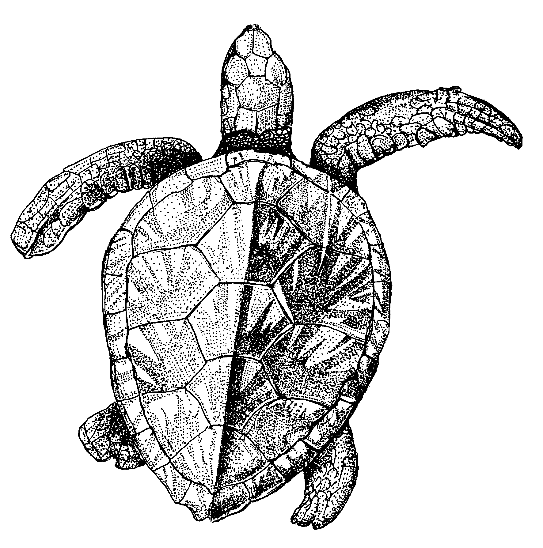 1772x1789 Venezuela Drawing