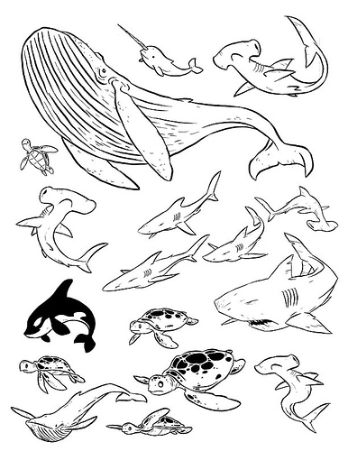 386x500 Best Photos Of Sea Creature Drawings